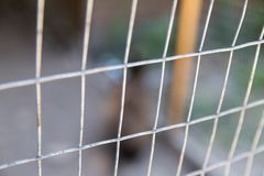 Abstract background texture grating aviary protection dangerous predators. Quarantine Stock Image