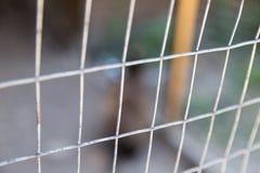 Abstract background texture grating aviary protection dangerous predators. Quarantine Stock Image