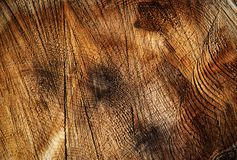 Groove on the cut of the wood. Abstract background or texture groove on the cut of the wood royalty free stock photo