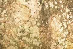 Abstract background and texture of moss on the stone royalty free stock photography
