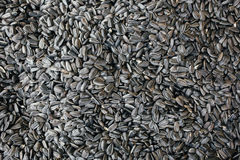 The abstract background texture of sunflower seeds Royalty Free Stock Images