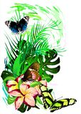 Tropical Butterflies in colors on a white background. Vector stock photography