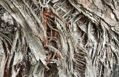 Abstract background with tree bark Stock Photo