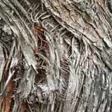 Abstract background with tree bark Royalty Free Stock Photography