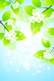 Abstract Background with Tree Branch Stock Photos