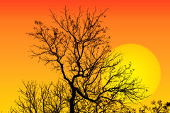 Abstract background with tree branch silhouette and sun Stock Images