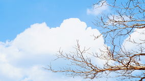 Abstract background of tree branches with blue sky. And white clouds Royalty Free Stock Images