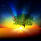 Abstract background with tree sunrise and stars Stock Photography