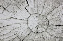 Abstract background tree. Tree trunk and pattern of growth rings royalty free stock images