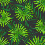 Abstract Background with Tropical Leaves Stock Photo