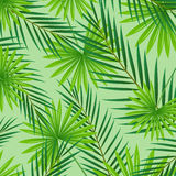 Abstract Background with Tropical Leaves Stock Image