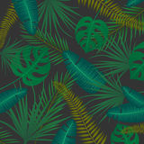 Abstract Background with Tropical Leaves Stock Photography
