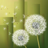 Abstract background with two flowers dandelions Stock Photography