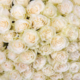 Abstract background of white roses Stock Images