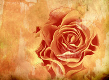Abstract Background With Rose Stock Images