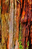 Abstract background of wood texture stock photos