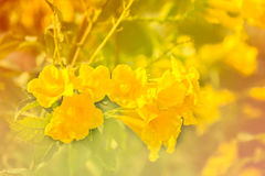 Abstract background of yellow flowers Stock Photos