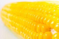 Abstract background of yellow fresh corn Stock Images