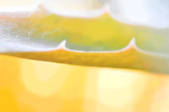 Abstract background. Yellow leaf Aloe Vera Stock Photos