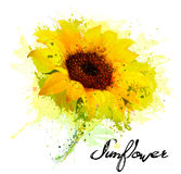 Abstract background with yellow sunflower. Vector Stock Photography