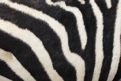 Abstract background of zebra stripe Stock Photo