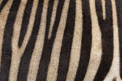 Abstract background of zebra stripes. Royalty Free Stock Photos