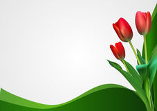 Abstract Backgroundn with Tulips Flowers. Vector Illustration. EPS10 stock illustration