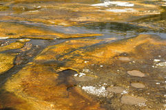 Abstract Bacteria. Yellowstone bacteria formation on hot spring royalty free stock photos
