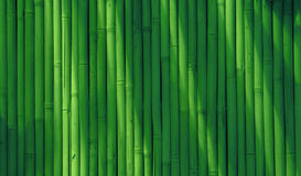 Abstract bamboo background Royalty Free Stock Image