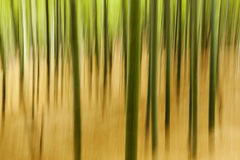 Abstract Bamboo Plants. Abstract, natural texture made from in-camera motion blur on bamboo plants Stock Photo