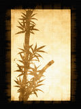 Abstract bamboo tree on framed backgound Stock Photography