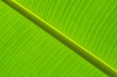 Abstract of banana leaf Royalty Free Stock Photography