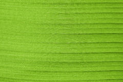 Abstract of banana leaf Stock Images