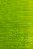 Abstract of banana leaf background Stock Photo
