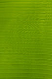 Abstract of banana leaf background Royalty Free Stock Photo