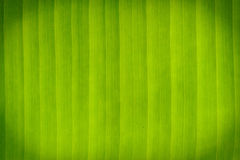 Abstract banana leaves. Royalty Free Stock Photography