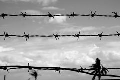 Free Abstract Barbed Wire Stock Photos - 61493393
