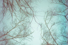 Abstract bare branches against sky Royalty Free Stock Image