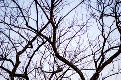 Abstract bare tree branches , Blue sky Stock Photo