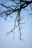 Abstract bare tree branches , Blue sky Stock Image