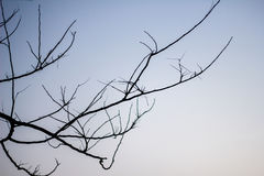 Abstract bare tree branches , Blue sky Royalty Free Stock Image