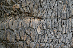 Abstract bark background Stock Images