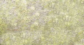 Abstract bark background Royalty Free Stock Image