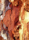 Abstract Bark Background 3 Stock Images