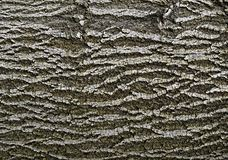 Abstract bark of deciduous tree Stock Images