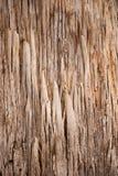 Abstract bark pattern Karri Tree Australia Royalty Free Stock Images