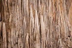 Abstract bark texture Karri Tree Australia Royalty Free Stock Images