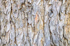 Abstract bark texture Royalty Free Stock Photography