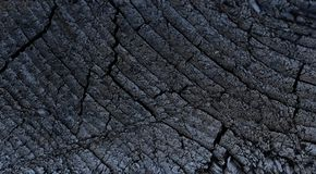 Abstract of bark wood texture background stock photo