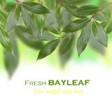Abstract bayleaf tree Stock Images